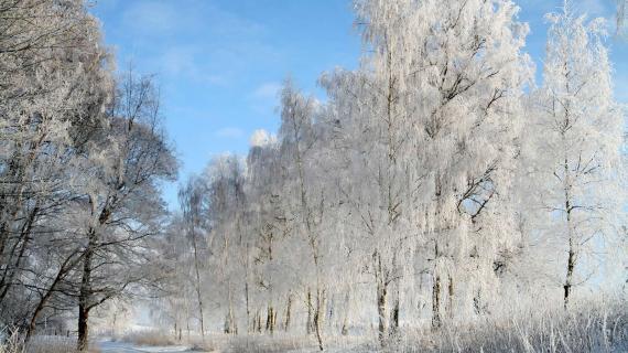 Næbbegaard plantage - vinterbillede - foto af Jean Schweizer