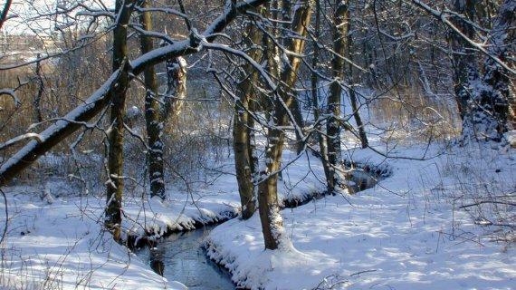 Kikhanerenden i sne Foto: Niels Valentin