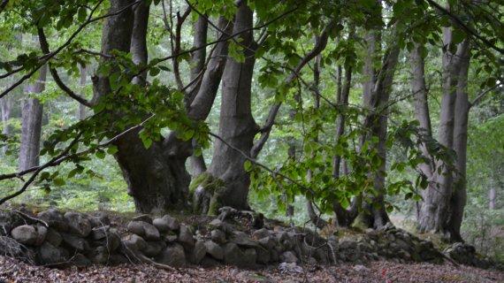 Foto: Højbjerg - træstamme