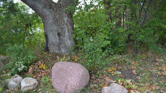 Foto: Højbjerg - sten