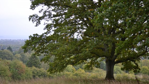 Foto: Høje Sandbjerg - træ