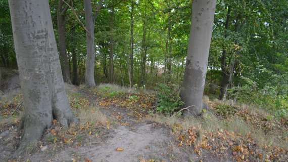 Foto: Lokes høj - mellem træerne