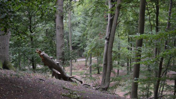 Foto: Maglebjerg - fra toppen