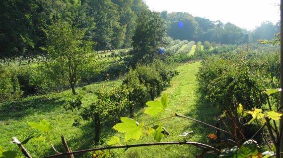 Foto: Plantage ved Caroline Mathildestien