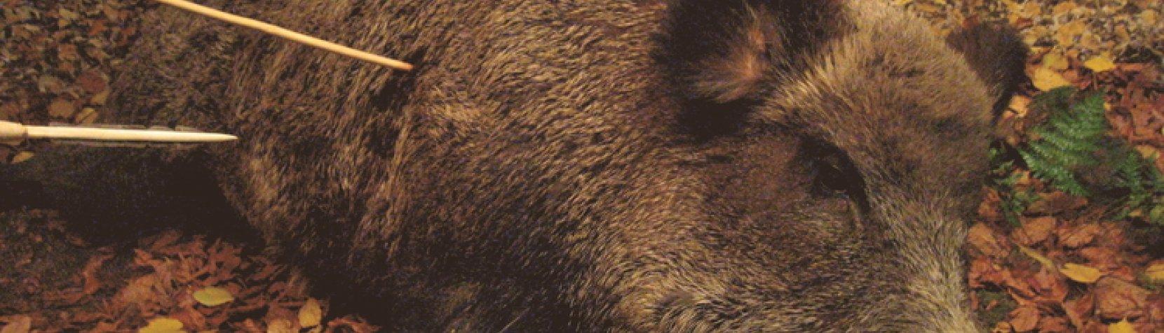 Foto: Vildsvinejagt i vinterferien