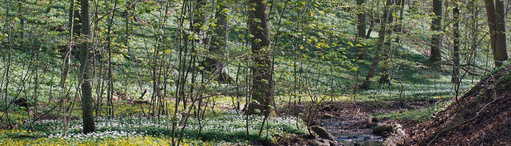 Skov der springer ud