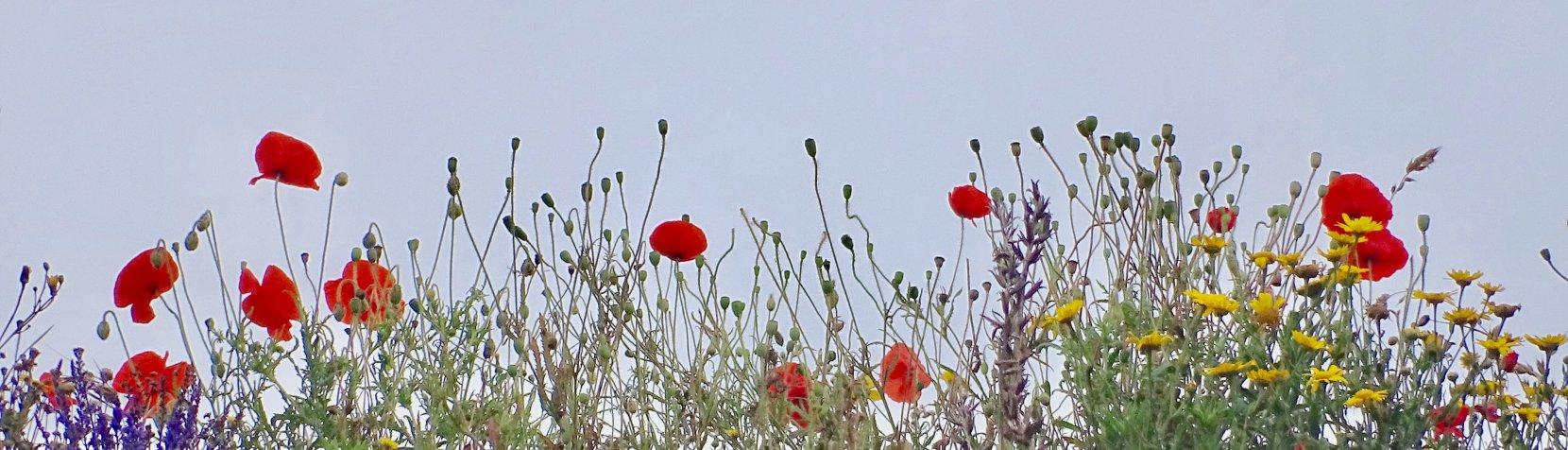 Blomster på eng