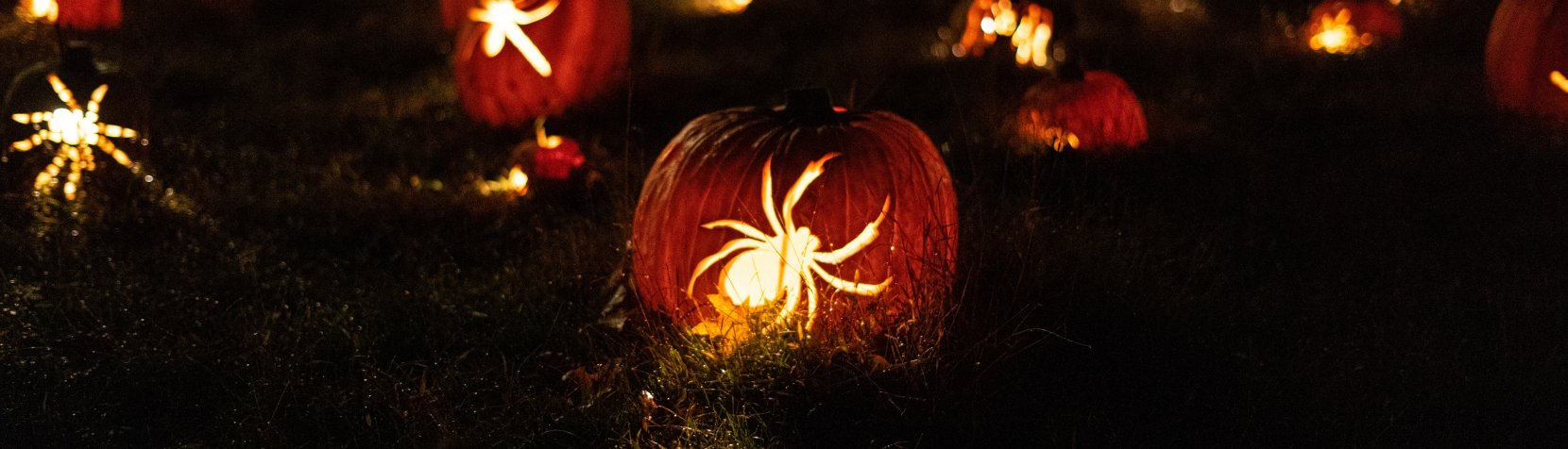 Græskar udskåret med edderkopper