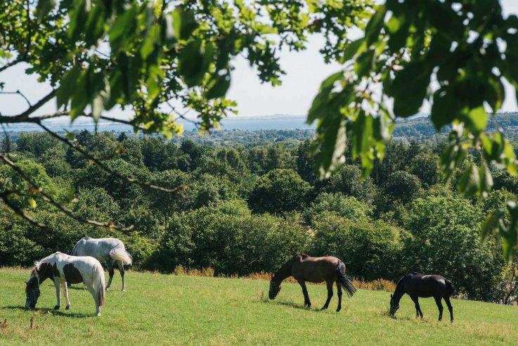 Heste i Søllerød Naturpark