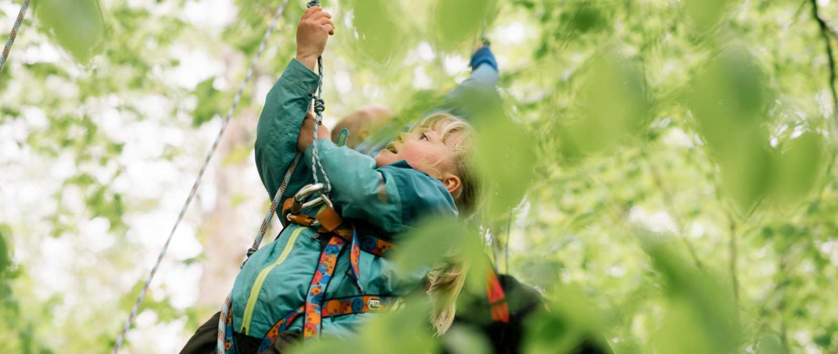 Foto: Arrangement i naturskolen - Skovens Dag - børn der kravler i træer