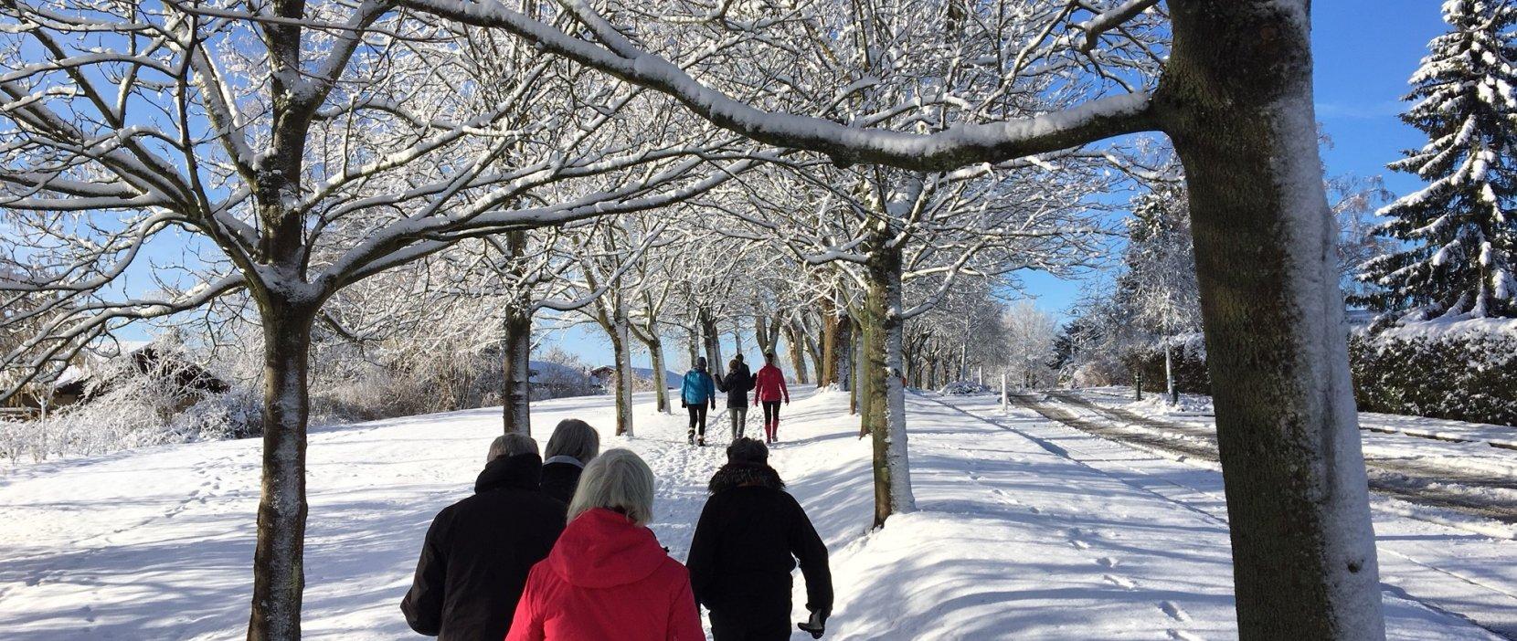 Foto:Grøn Puls vinter