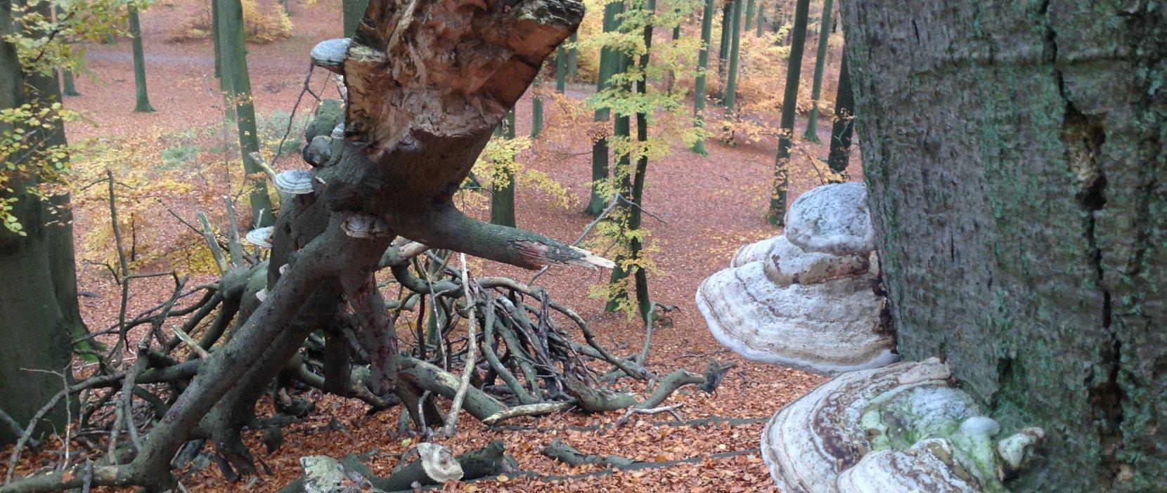 Foto: Træ på Maglebjerg