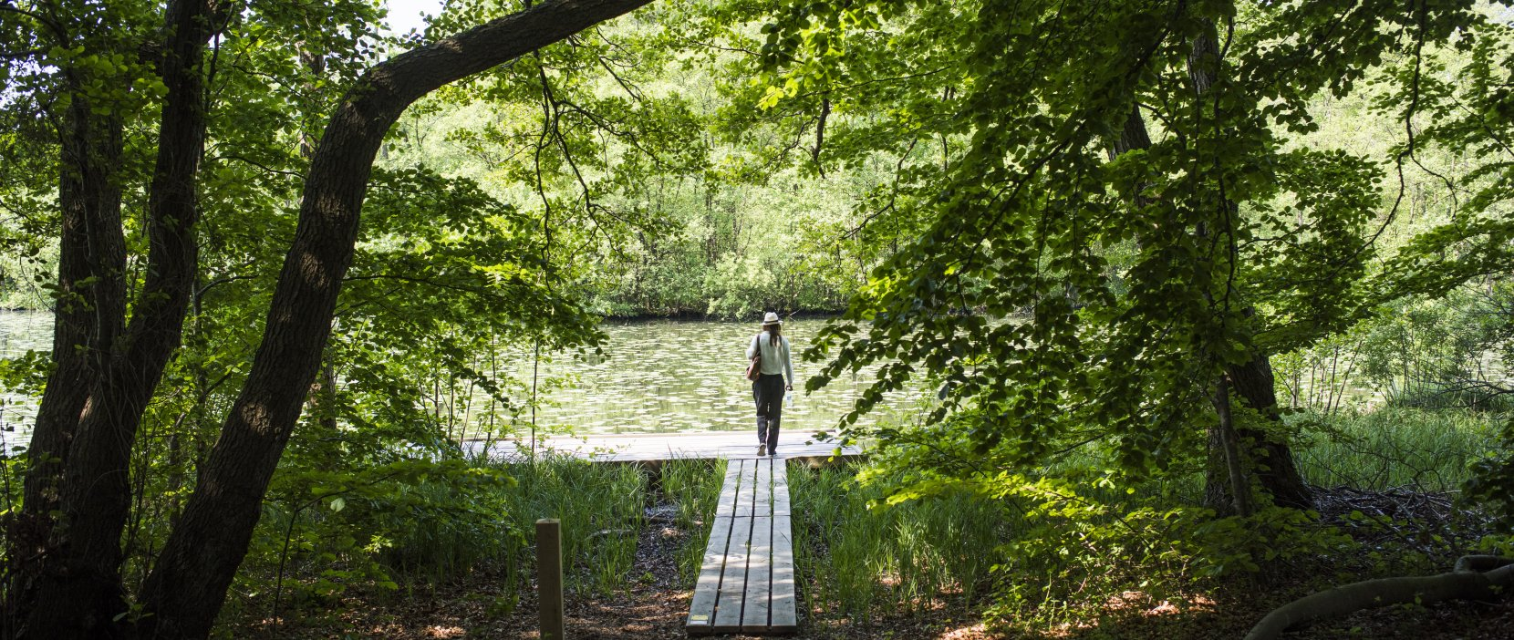 Vaserne - Oplev den smukke natur i Rudersdal