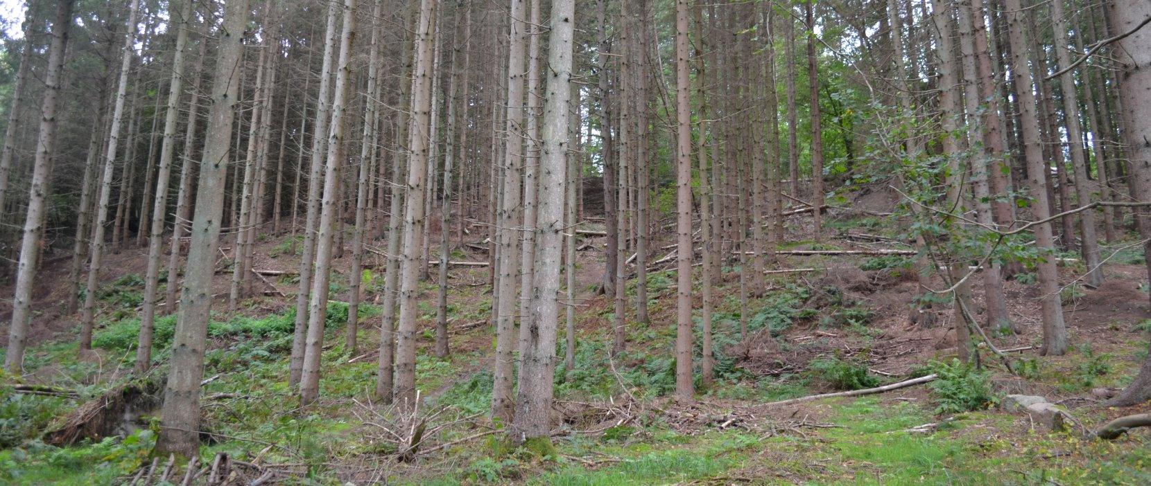 Foto: Højbjerg set gennem træerne